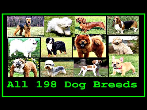 All Dog Breeds In The World (A to Z)