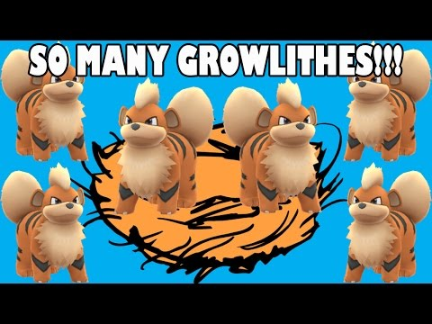 INSANE Growlithe Nest!!! - Pokemon GO Ep 5