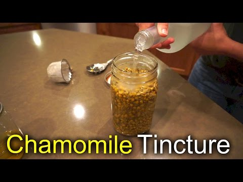 Chamomile Tincture - How we use and make it