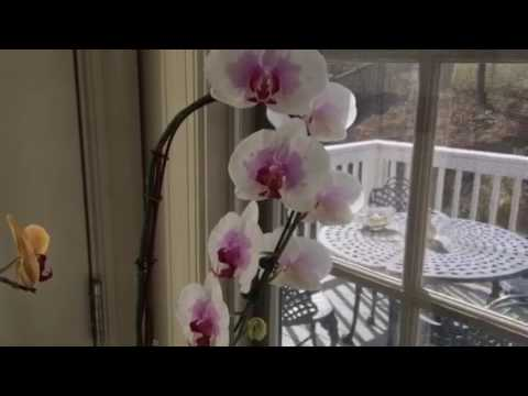 How to keep orchids in your house or apartment.