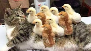 🐶Funniest 🐶 Pets Funny Complition 😻 Cats | Awesome Funny Pet Animals Videos | Pets Funny TV