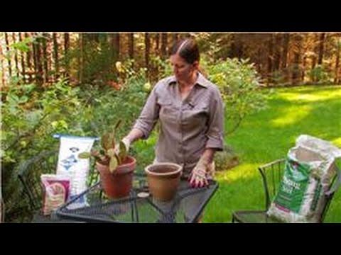 Gardening Preparation Tips : How to Make Potting Soil for Cactus Plants