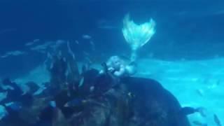 Mermaids Are Real At Blue Mermaid Designs