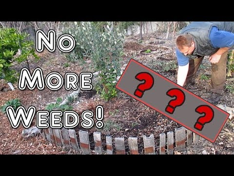 Eliminate Weeding Your Garden Once And For All! Easy, Organic Weed Control