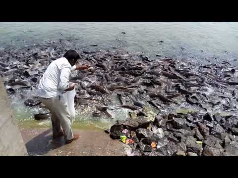 HOW IT'S MADE FISH FARMS IN INDIA
