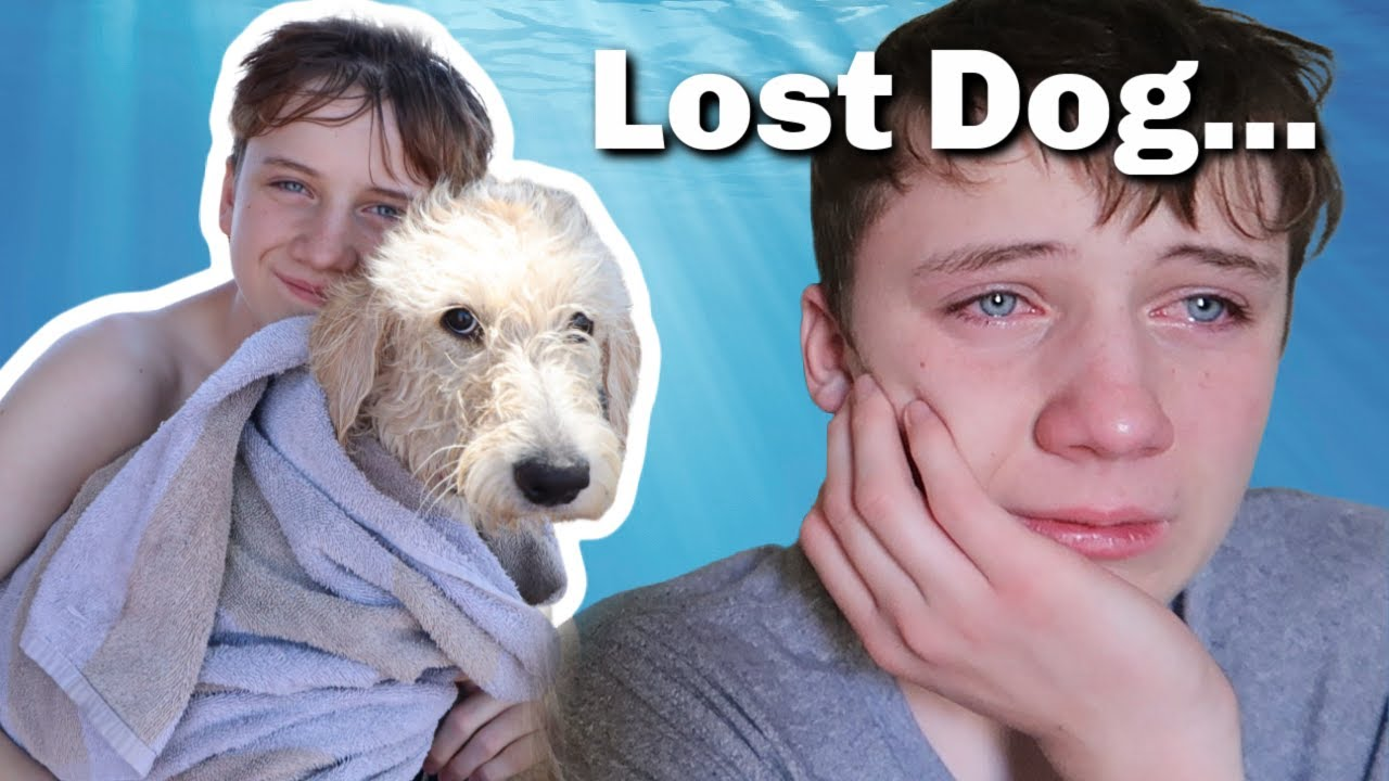 Our Dog RAN AWAY | Missing Dog | Lost Dog