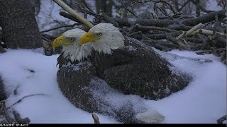 DC Eagle Cam 3-14-17: Mr. President & The First Lady Face Winter Storm Stella