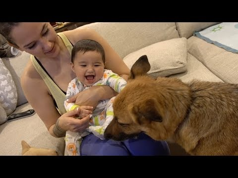 Our Baby Plays With Our German Shepherd!