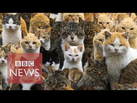 Japan's Cat Island - BBC News