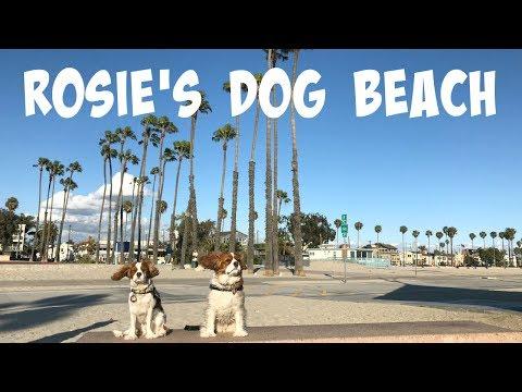 Rosie's Dog Beach | Long Beach California Los Angeles County