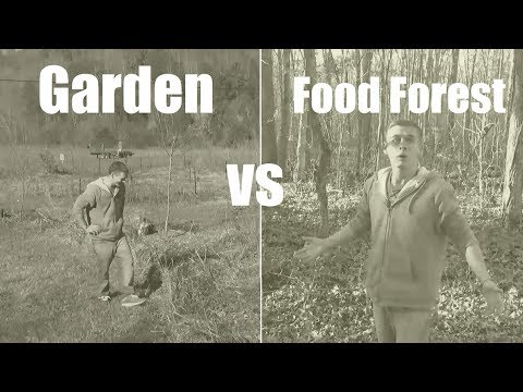 Garden vs Food Forest (1950s infomercial)