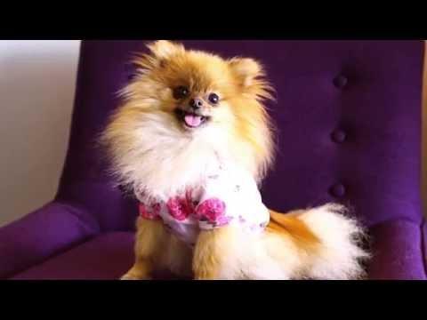 Baby Onesie to Dog Shirt - DIY$ by Perk