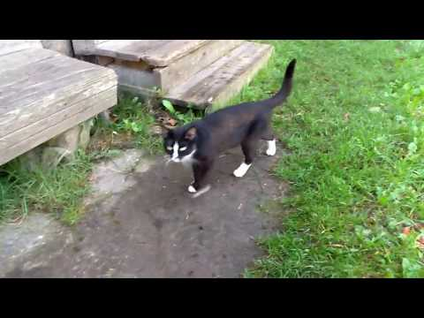 Cute funny cats playing with master