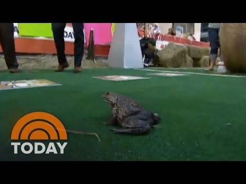 Savannah Guthrie HATES Frogs | Archives | TODAY