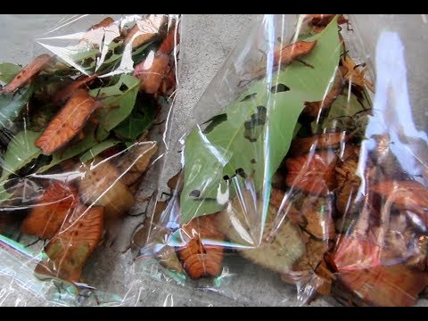 Edible insects on a market in Sakon Nakhon, Thailand