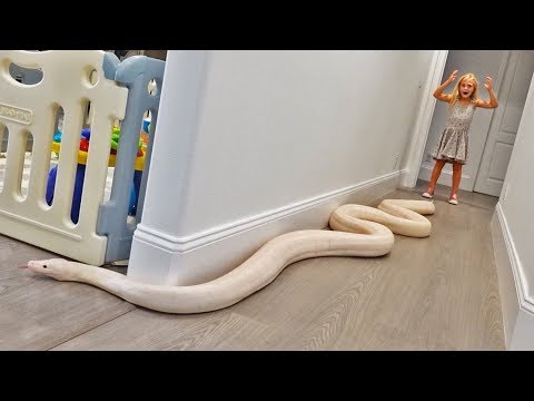 Xxx Mp4 15 Foot Python Gets Loose In Our House TERRIFYING 3gp Sex
