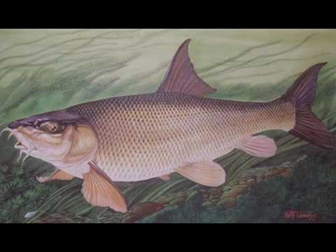 Ep  198 Keith Linsell, Angling Encounters Part 2