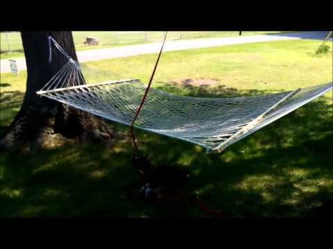 Boston Terrier Creates a New Game with his ball and the hammock