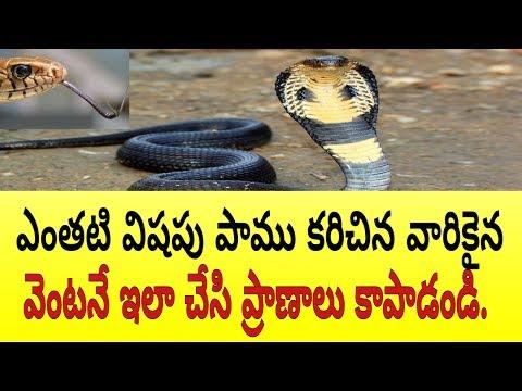 Snake Bite Treatment in Telugu.పాము కరిస్తే వెంటనే ఇలా చేయండి.