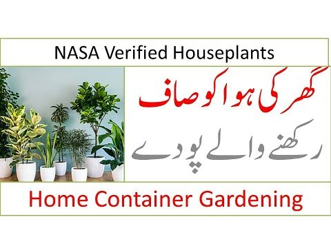 Indoor plants that clean the air and remove toxins -  NASA Verified Houseplants - Hindi / Urdu