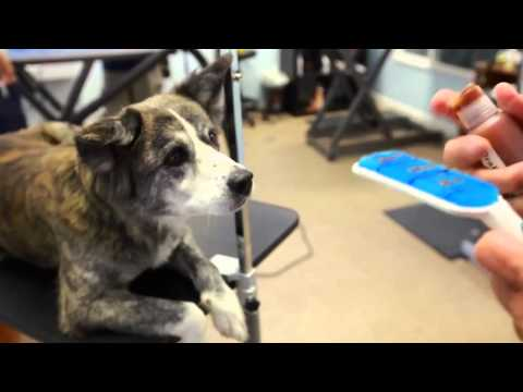 Bye Bye, Bad Dog Breath —WhiteSmile.co.nz