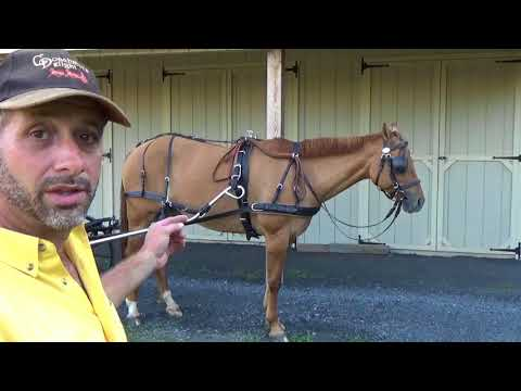Single Horse Hitching Sequence