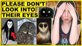 Why You Should NEVER Look At An Owl