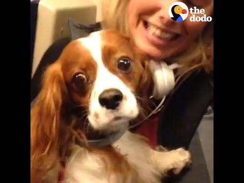 Dog Pulled Out From Under Train