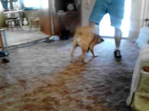 Dog bites ankles pt 2