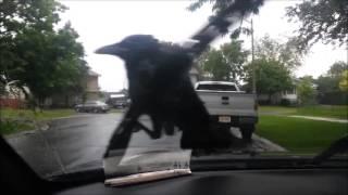 death grips bird
