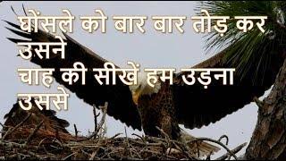 Daily Hindi Bible|Study about the book of Genesis|उत्पत्ति