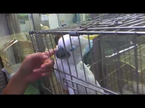 How to Get Bird Flu