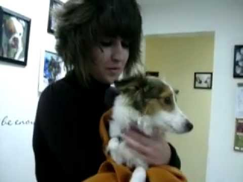 Tikki Comes Home from her Spay and Dental at Salt Lake Spay and Neuter.AVI