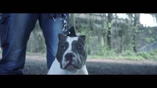 P110 - Big Dog Yogo - Sniper [Net Video]