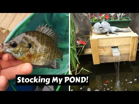 Catching Fish To STOCK My Pond!! ~ New Pets for the Homemade Pond