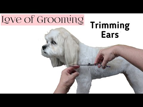 How to Trim Dogs Ears | Trimming the Bottoms of Dogs Ears