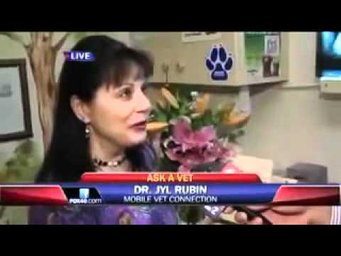Signs of Pet Urine or Bladder Infections-Ask a Vet with Dr. Jyl Rubin