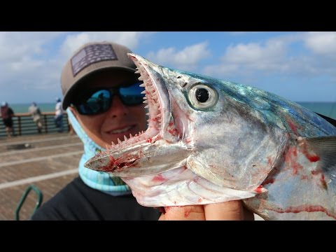 Catch, Clean, Cook and Eat!!! Juno Pier Spanish Mackerel