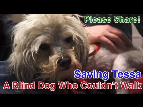 Tessa's Rescue and Rehab - A Blind Dog Who Couldn't Walk - Please Share