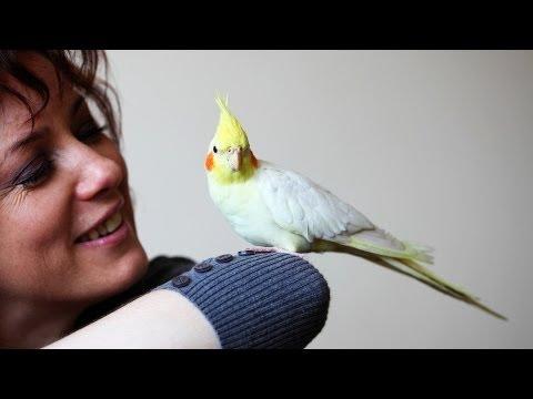 Do Birds Cause Allergies?   Pet Bird