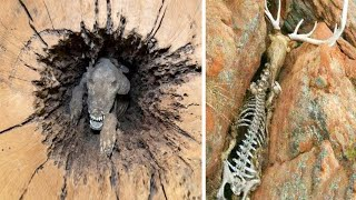 12 Animals That Nature Has Treated Unfairly