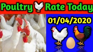 [ 01-04-2020 ] पोल्ट्री औरअंडे का थोक भाव | wholesale broiler poultry chicken latest rate today