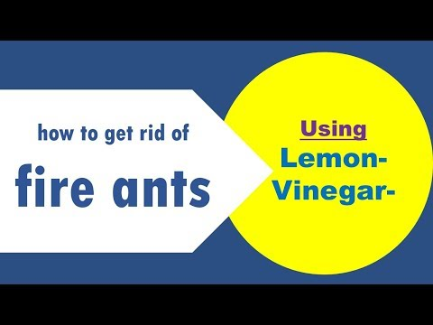 How To Get Rid Of Fire Ants With Lemon  / Vinegar.