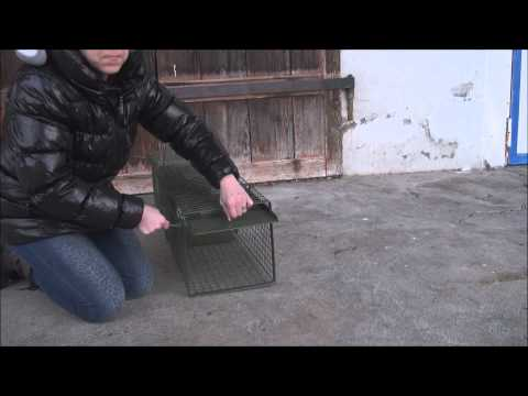 How to set a Feral Cat Trap
