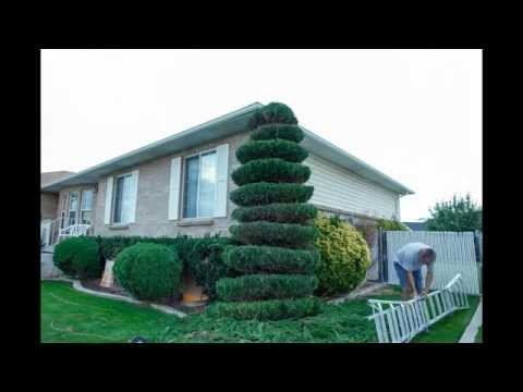 How to make a spiral tree in a minute (time lapse video)