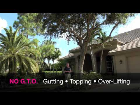 Tree Pruning For Hurricanes2.mov