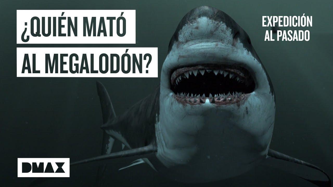 Megalodón: ¿Qué sucedió con el depredador marino de las profundidades?   Expedición al pasado