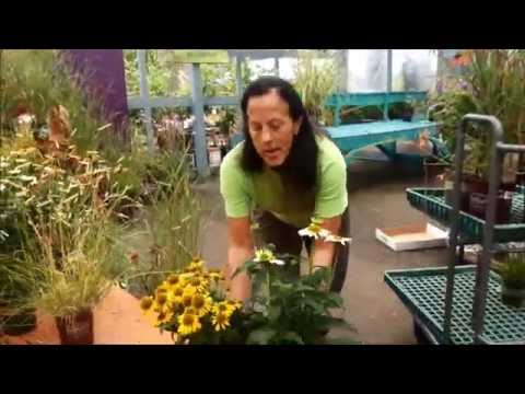 Lynns Plants for a Fall Color Garden