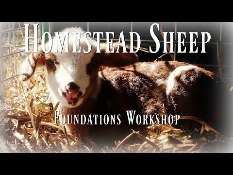 Homestead Sheep Foundations Online Workshop FREE