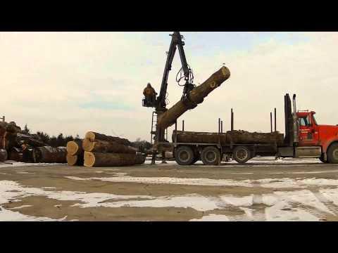 White Oak Logs for our Wood-Mizer